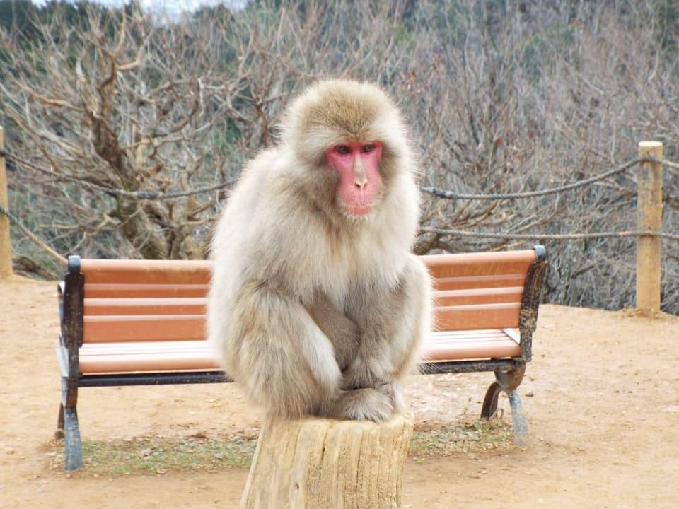 Kyoto – Arashiyama : Parc des singes Iwatayama