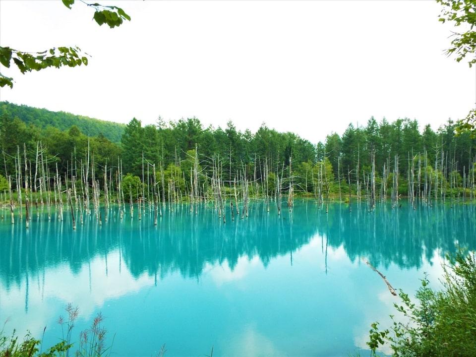 Hokkaido – Biei : Aoi-ike