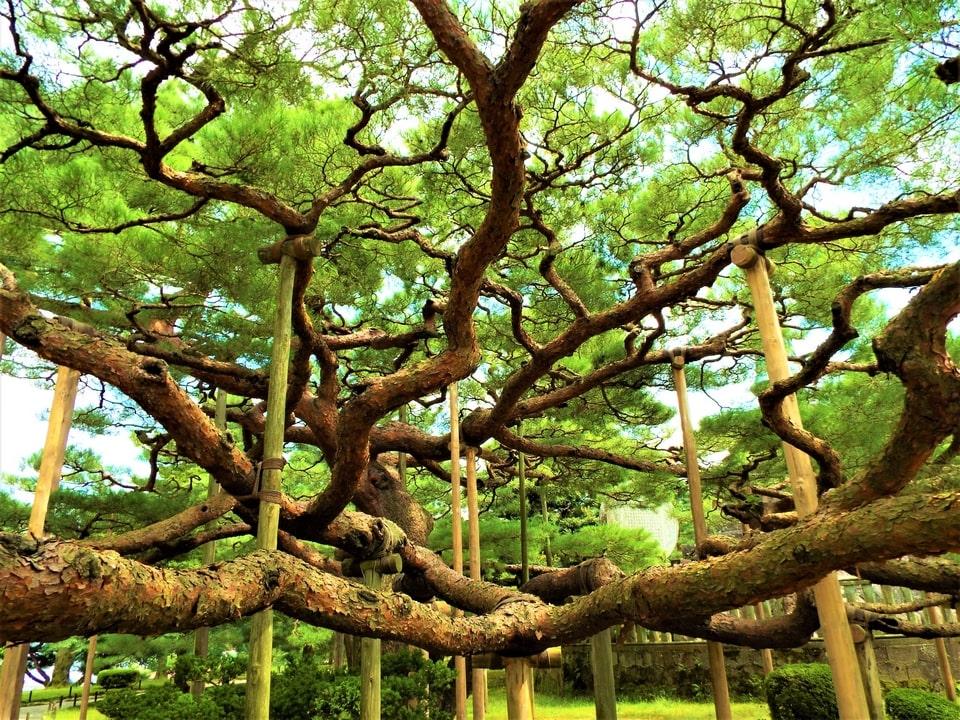 Kanazawa – Le jardin Kenroku-en