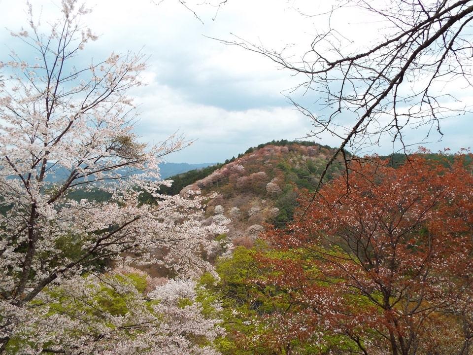 Mont Yoshino – La montagne recouverte de cerisiers