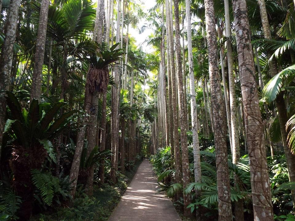 Okinawa – Southeast Botanical Gardens : Botanical Garden