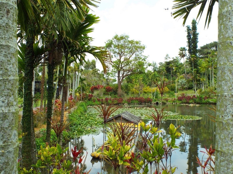 Okinawa – Southeast Botanical Gardens : Water Garden