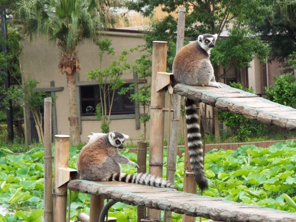 Tokyo – Zoo d'Ueno