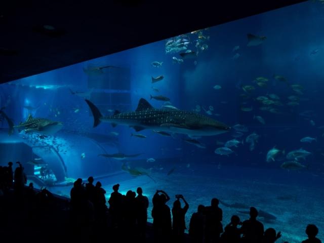 Ocean Expo Park - Churaumi Aquarium