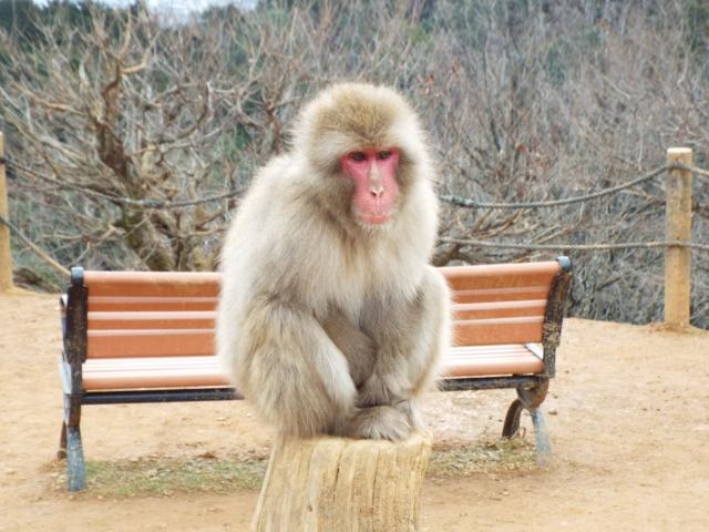 Arashiyama : Parc des singes Iwatayama